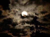noc_ksiezyc_chmury_drzewo.jpeg